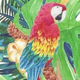 Maven Macaw Events photo