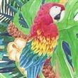 Maven Macaw Events thumbnail